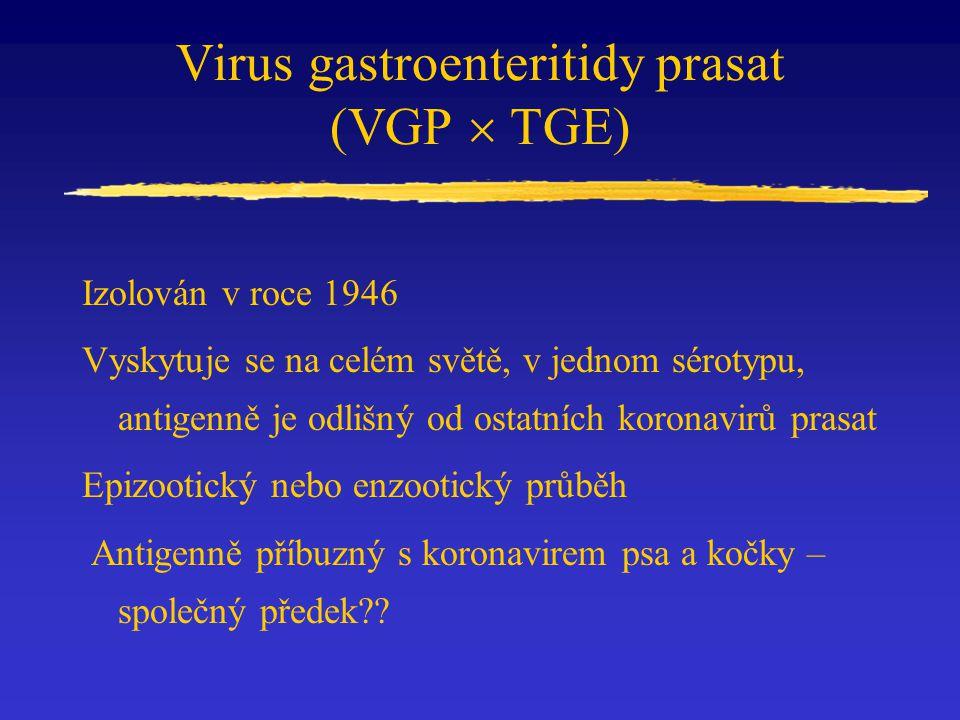 Virus gastroenteritidy prasat (VGP  TGE)