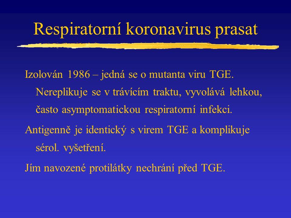 Respiratorní koronavirus prasat