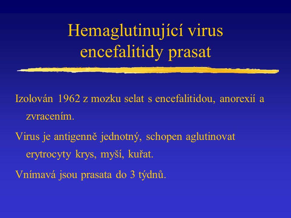 Hemaglutinující virus encefalitidy prasat