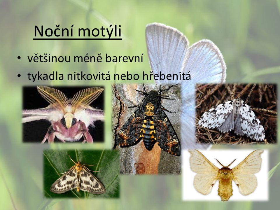 Noční motýli většinou méně barevní tykadla nitkovitá nebo hřebenitá
