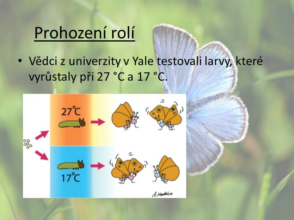 Prohození rolí Vědci z univerzity v Yale testovali larvy, které vyrůstaly při 27 °C a 17 °C.