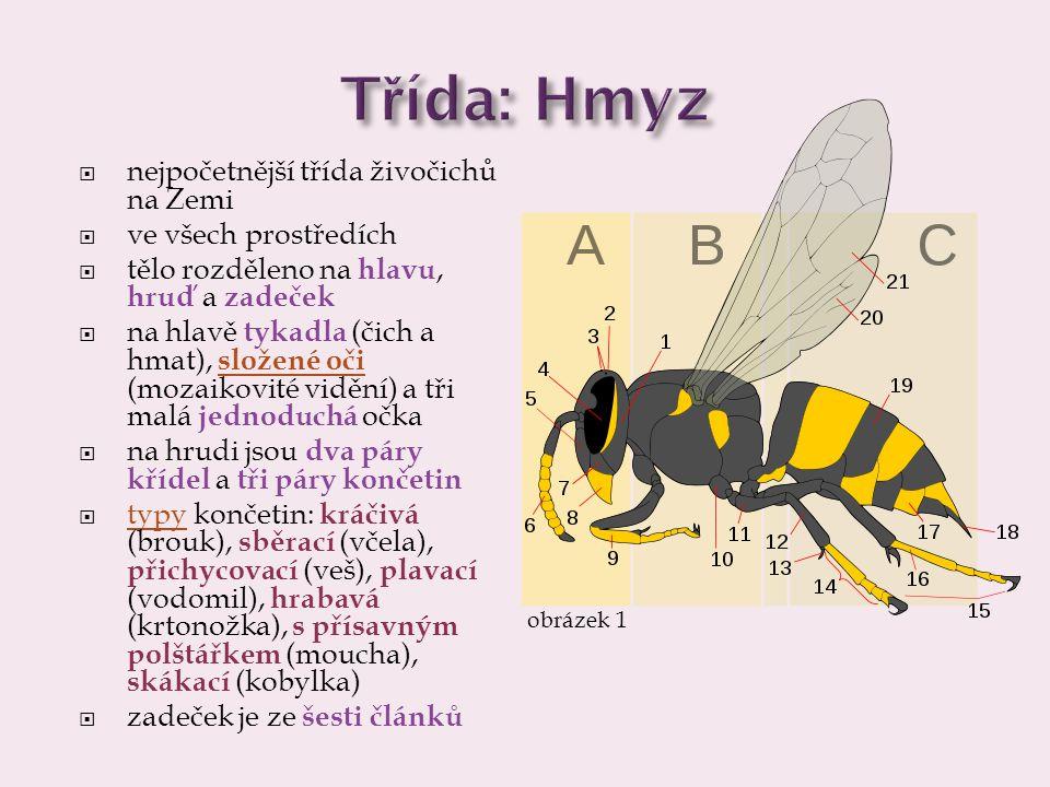 Třída: Hmyz nejpočetnější třída živočichů na Zemi ve všech prostředích