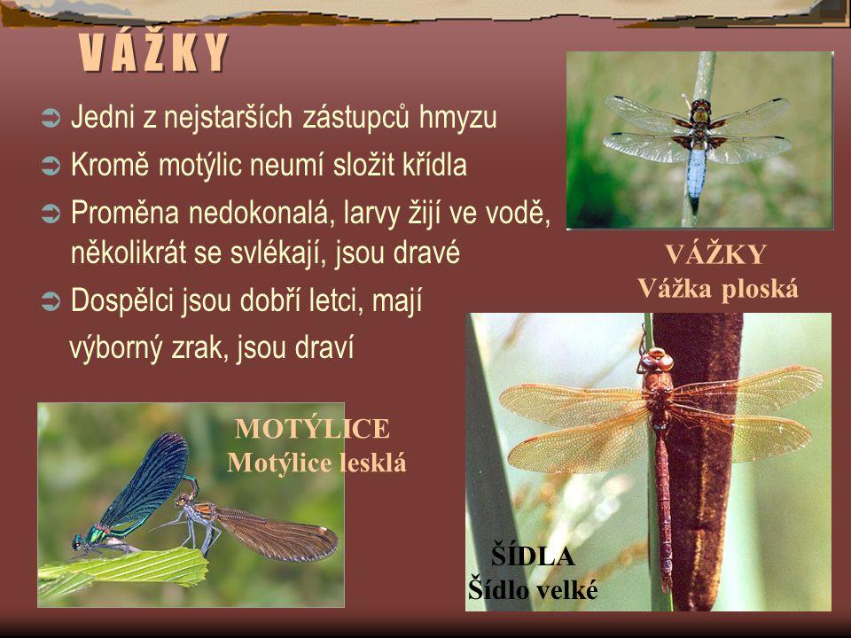 V Á Ž K Y Jedni z nejstarších zástupců hmyzu
