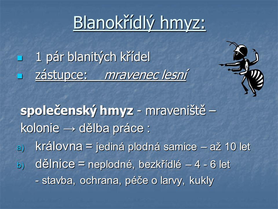 Blanokřídlý hmyz: 1 pár blanitých křídel zástupce: mravenec lesní