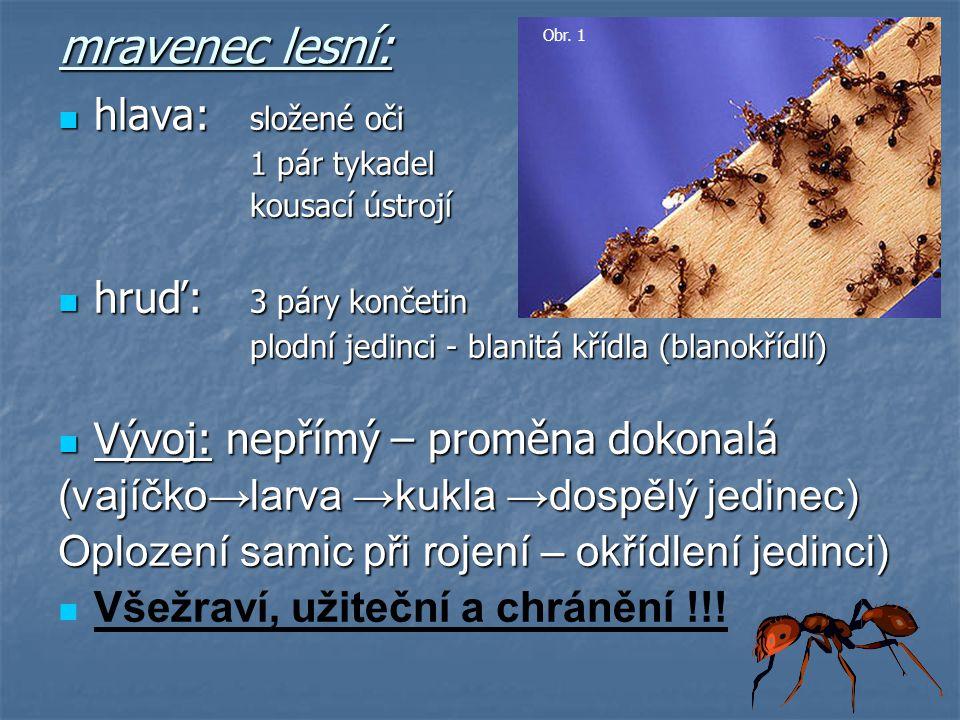 mravenec lesní: hlava: složené oči hruď: 3 páry končetin