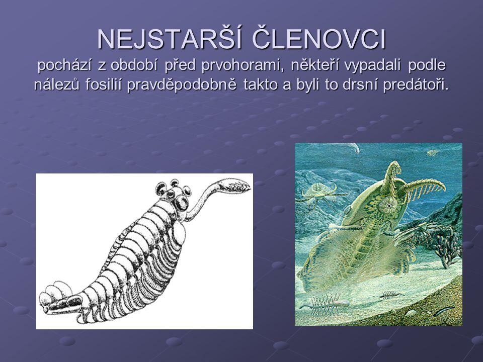 NEJSTARŠÍ ČLENOVCI pochází z období před prvohorami, někteří vypadali podle nálezů fosilií pravděpodobně takto a byli to drsní predátoři.