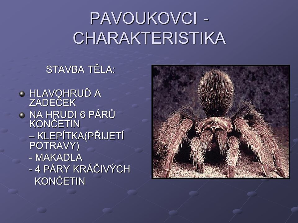 PAVOUKOVCI - CHARAKTERISTIKA