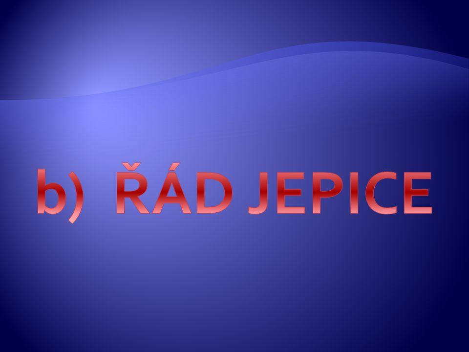 b) ŘÁD JEPICE