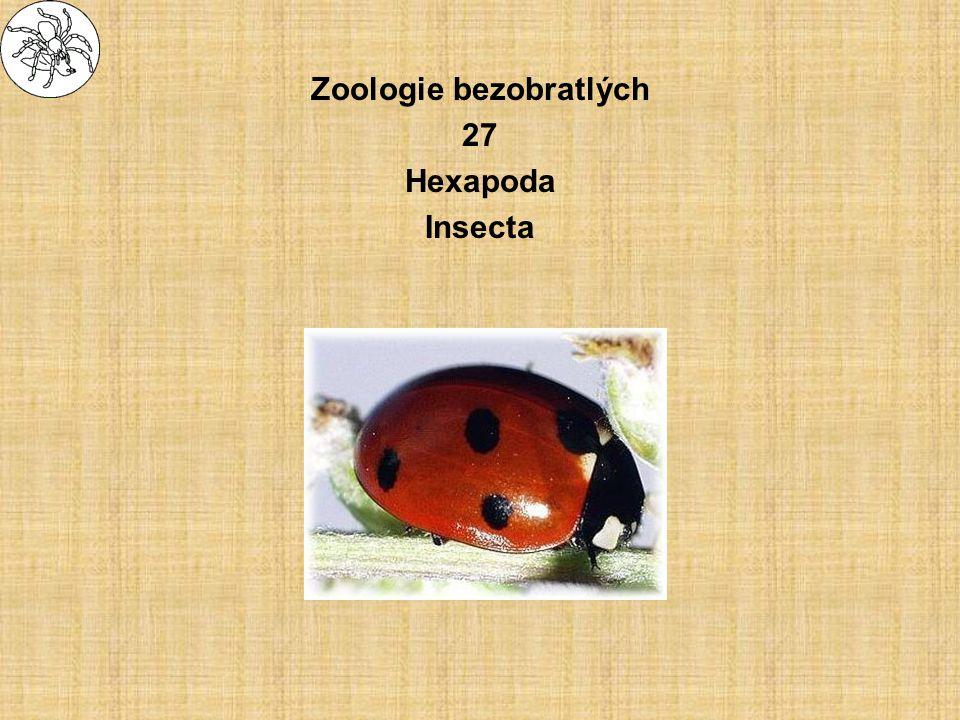 Zoologie bezobratlých 27 Hexapoda Insecta