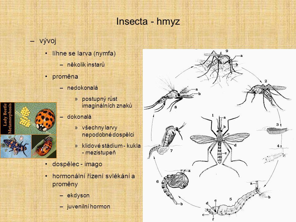 Insecta - hmyz vývoj líhne se larva (nymfa) proměna dospělec - imago