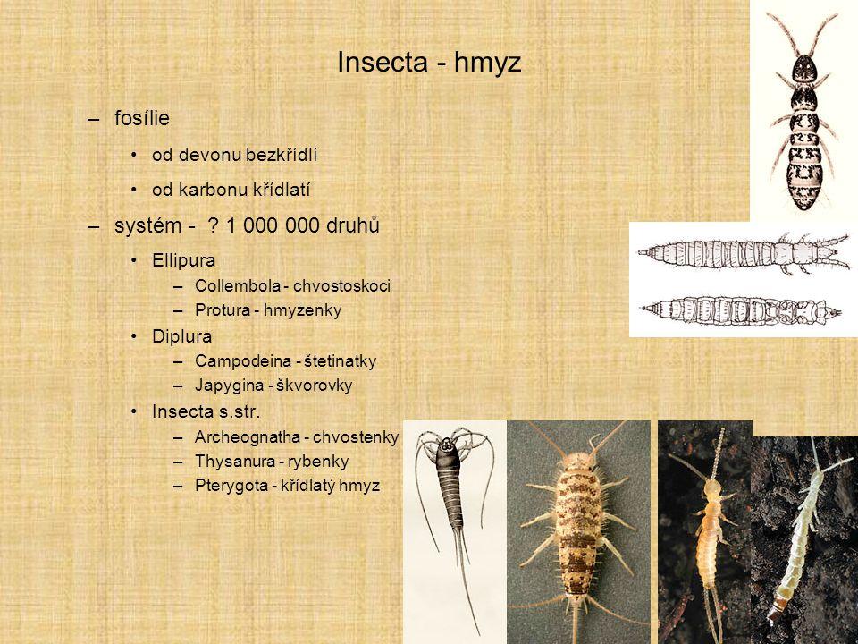 Insecta - hmyz fosílie systém - 1 000 000 druhů od devonu bezkřídlí