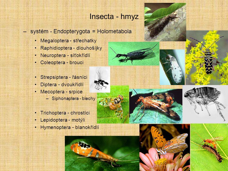 Insecta - hmyz systém - Endopterygota = Holometabola