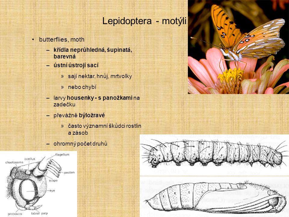 Lepidoptera - motýli butterflies, moth