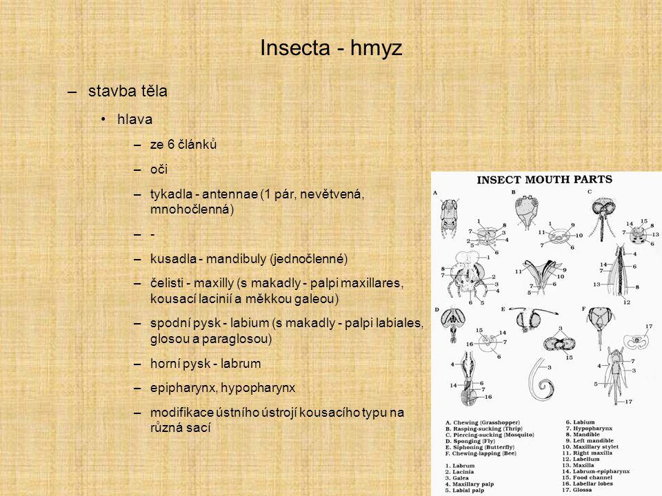 Insecta - hmyz stavba těla hlava ze 6 článků oči