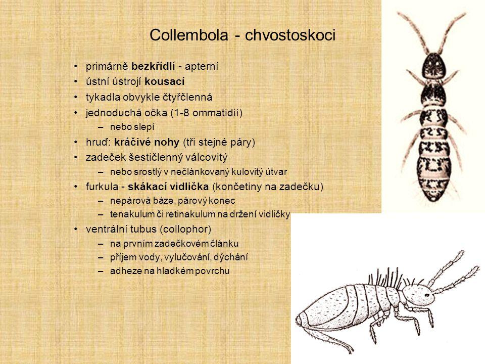 Collembola - chvostoskoci