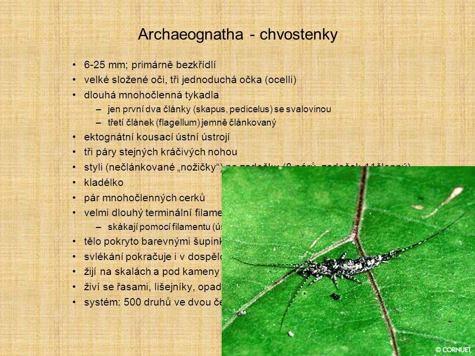 Archaeognatha - chvostenky