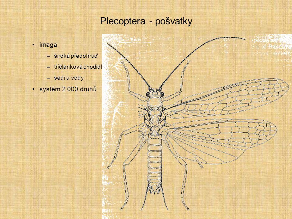 Plecoptera - pošvatky imaga systém 2 000 druhů široká předohruď