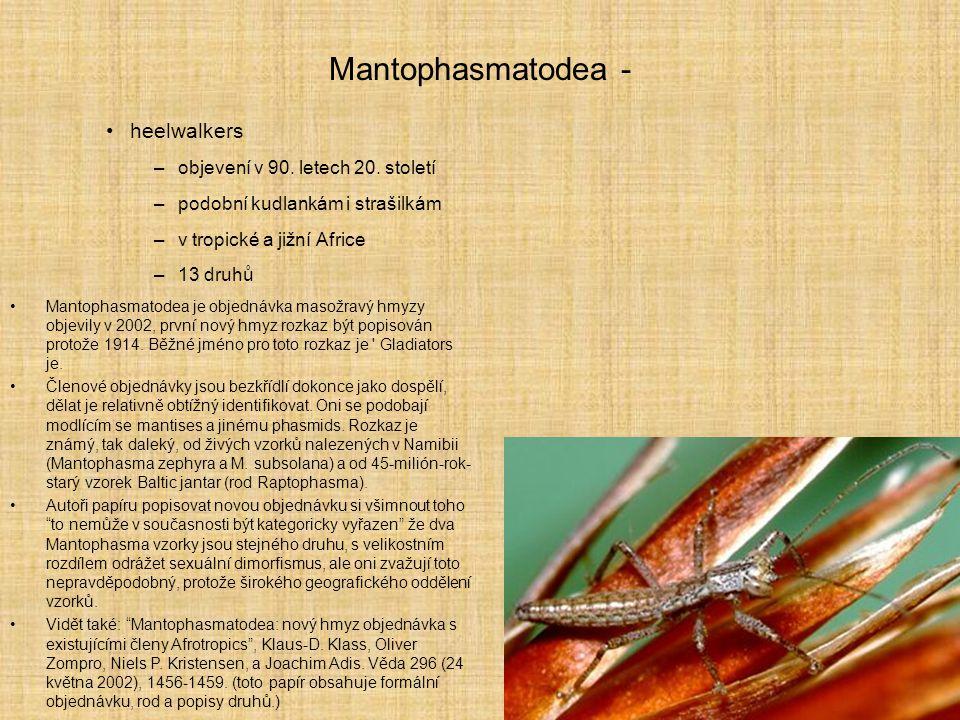Mantophasmatodea - heelwalkers objevení v 90. letech 20. století