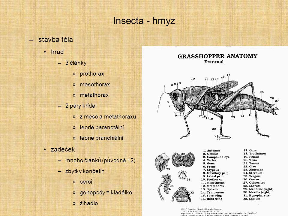 Insecta - hmyz stavba těla hruď zadeček 3 články prothorax mesothorax