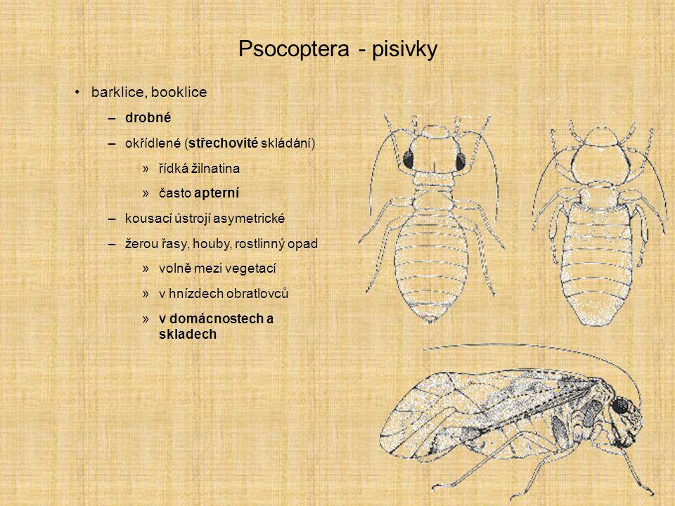 Psocoptera - pisivky barklice, booklice drobné