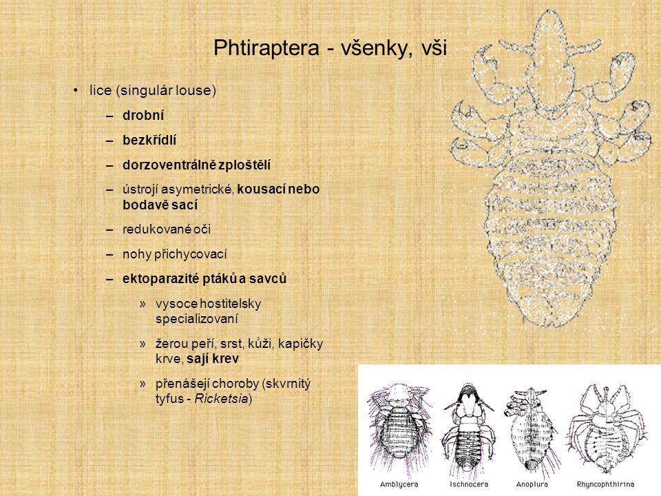 Phtiraptera - všenky, vši