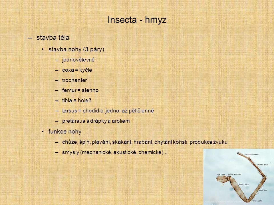 Insecta - hmyz stavba těla stavba nohy (3 páry) funkce nohy