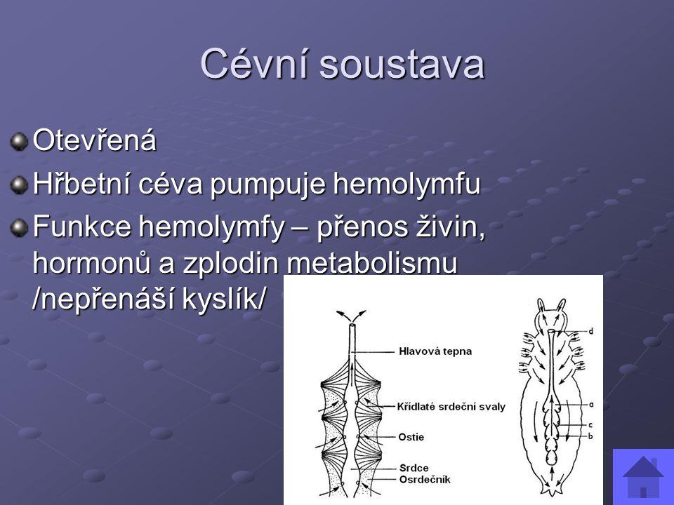 Cévní soustava Otevřená Hřbetní céva pumpuje hemolymfu
