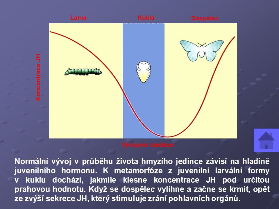 Larva Kukla. Dospělec. Vývojové stadium. Koncentrace JH.