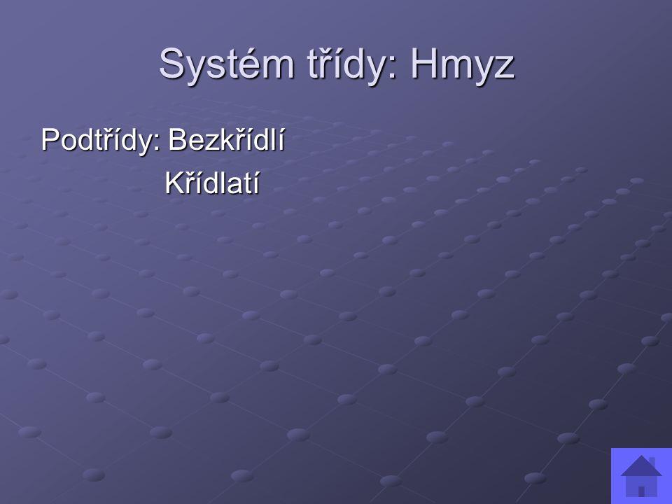 Systém třídy: Hmyz Podtřídy: Bezkřídlí Křídlatí