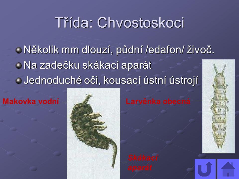 Třída: Chvostoskoci Několik mm dlouzí, půdní /edafon/ živoč.