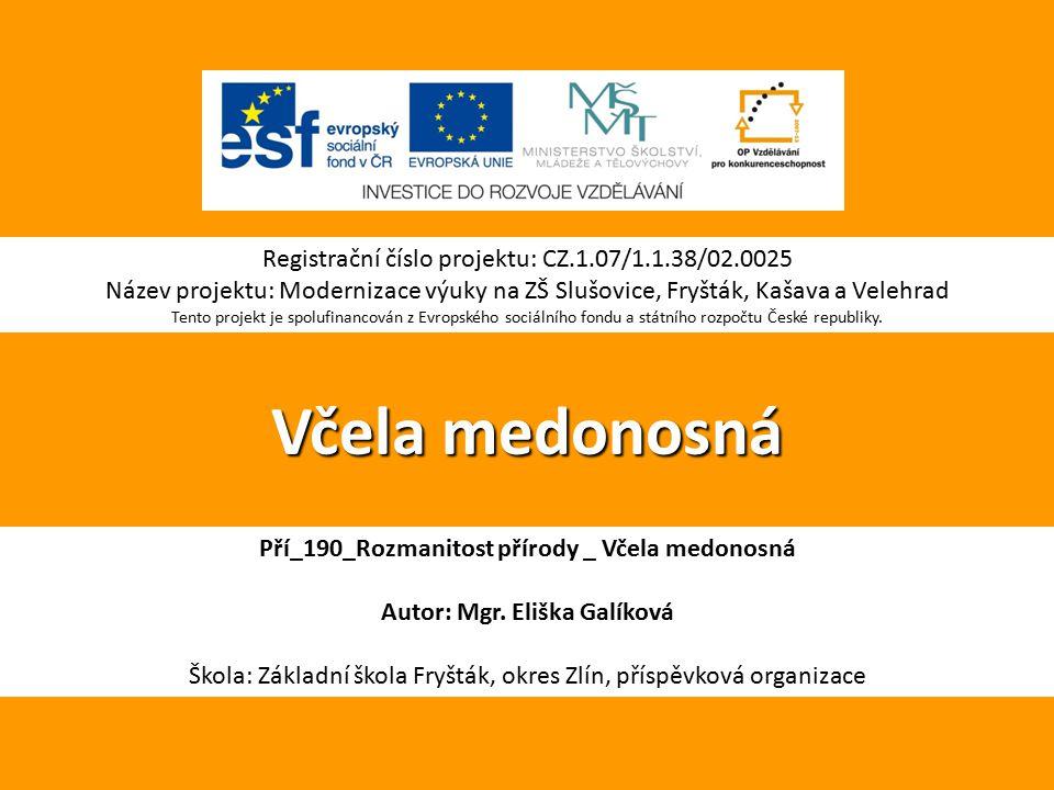 Včela medonosná Registrační číslo projektu: CZ.1.07/1.1.38/02.0025