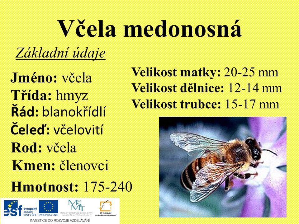 Včela medonosná Základní údaje Jméno: včela Třída: hmyz