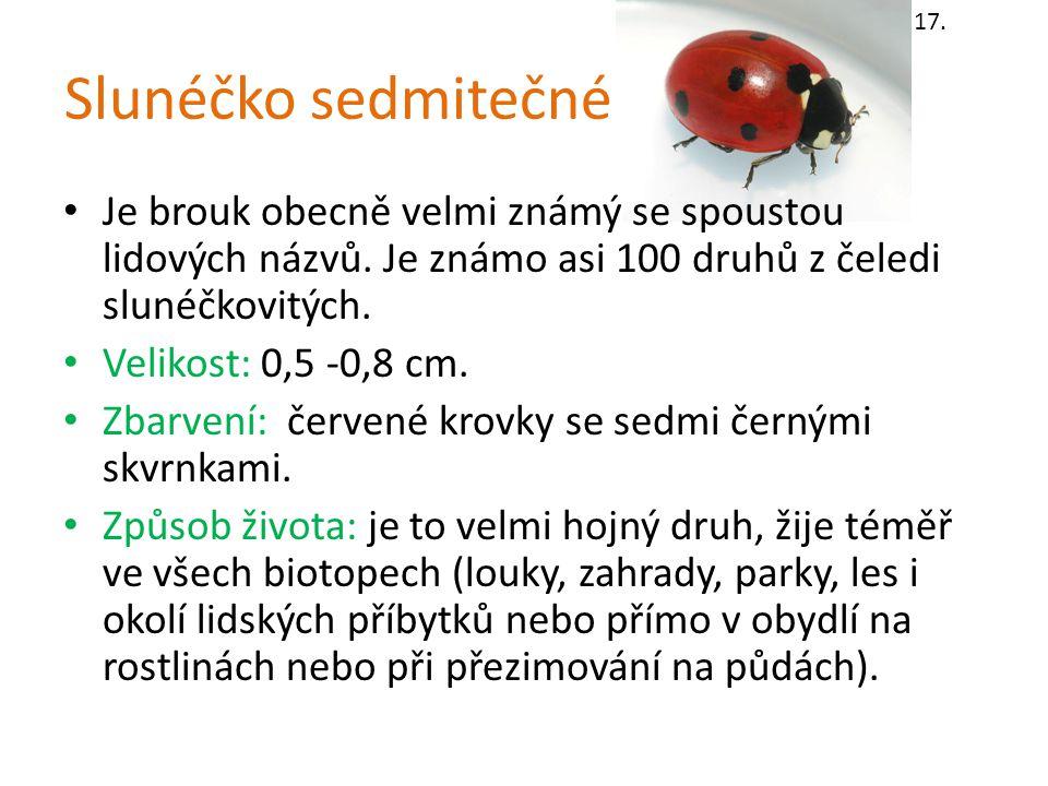 17. Slunéčko sedmitečné. Je brouk obecně velmi známý se spoustou lidových názvů. Je známo asi 100 druhů z čeledi slunéčkovitých.