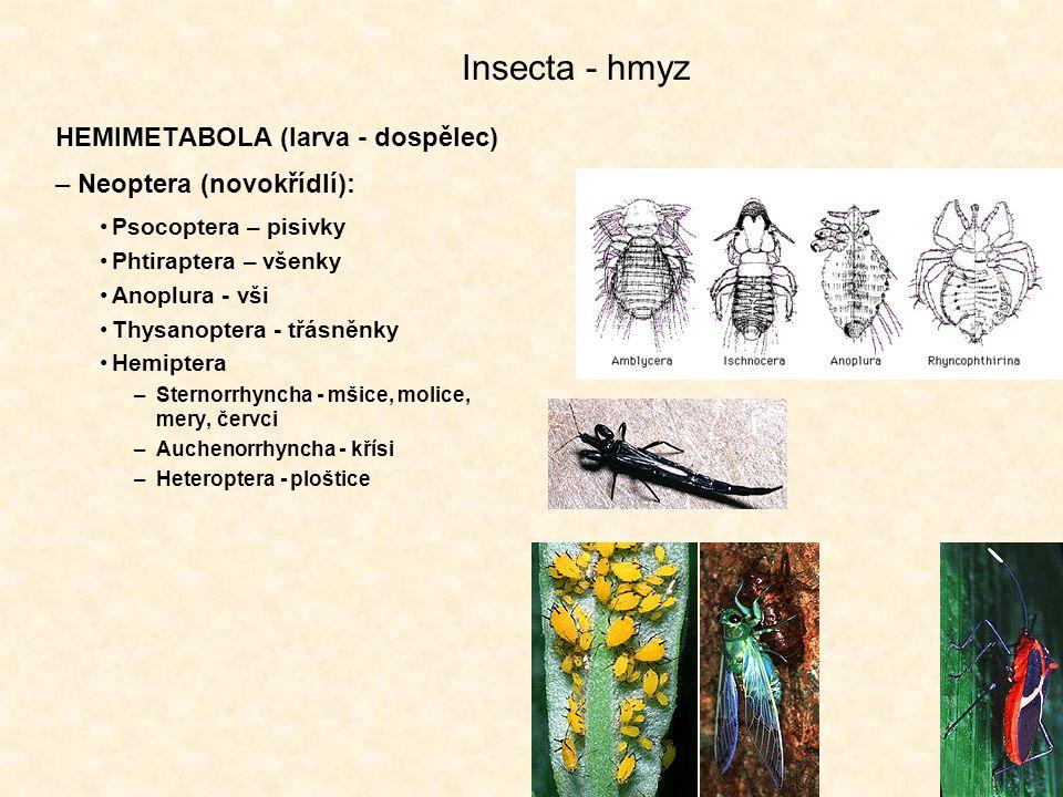 Insecta - hmyz HEMIMETABOLA (larva - dospělec) Neoptera (novokřídlí):