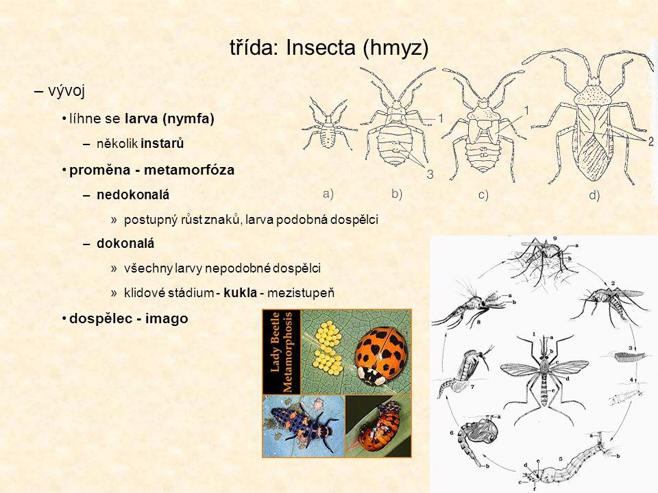 třída: Insecta (hmyz) vývoj líhne se larva (nymfa)