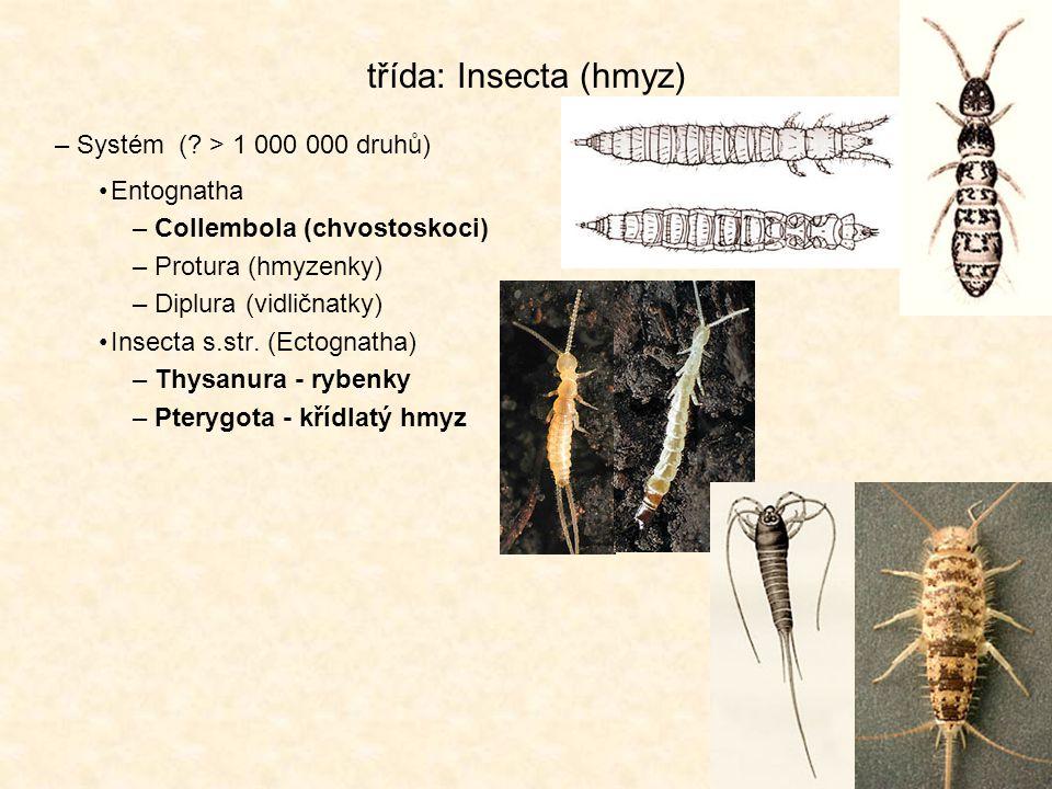 třída: Insecta (hmyz) Systém ( > 1 000 000 druhů) Entognatha