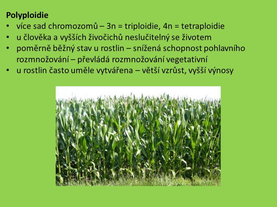 Polyploidie více sad chromozomů – 3n = triploidie, 4n = tetraploidie. u člověka a vyšších živočichů neslučitelný se životem.