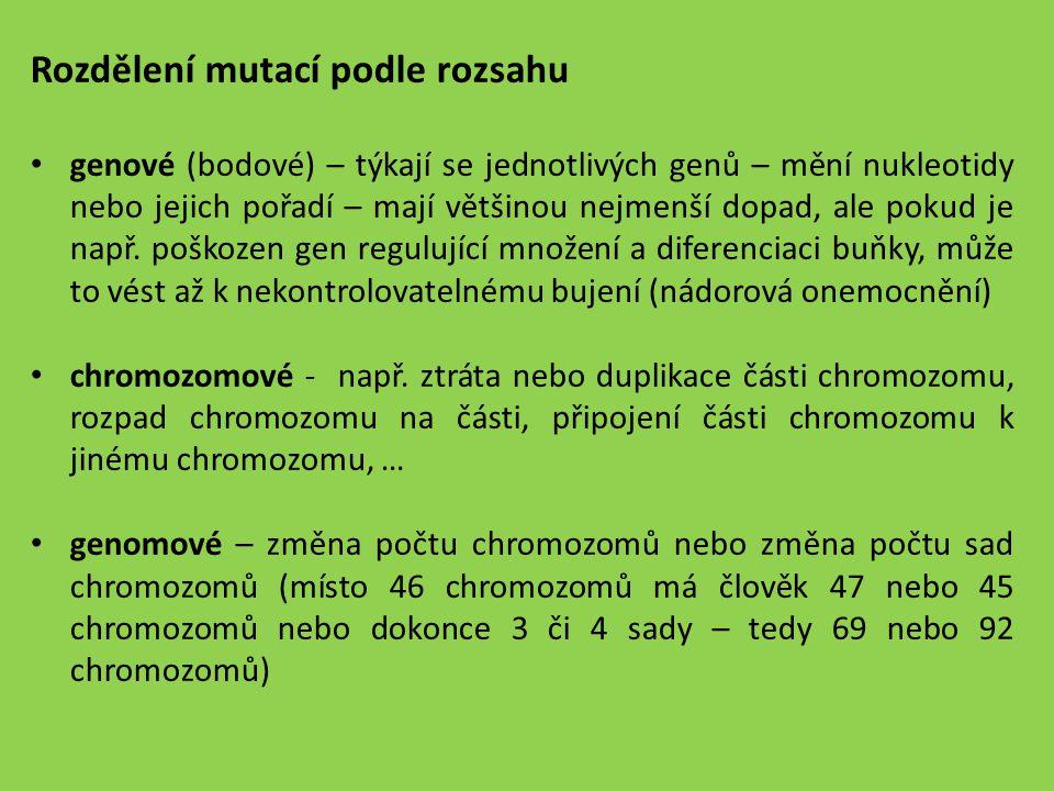 Rozdělení mutací podle rozsahu