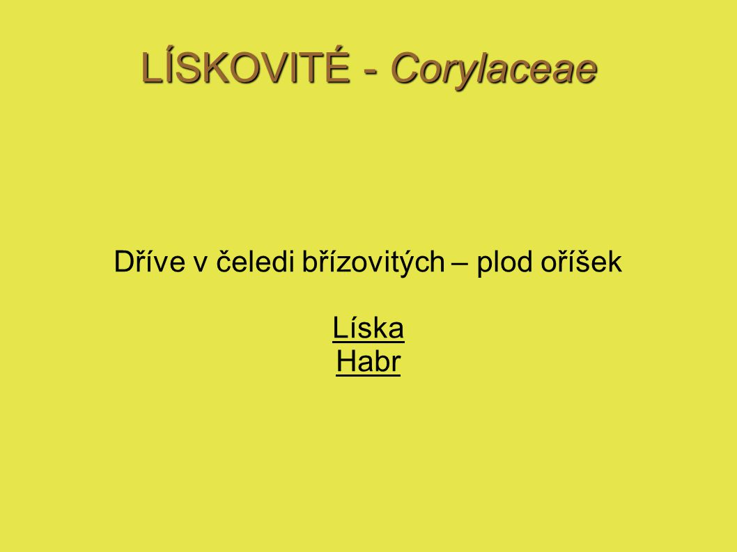 LÍSKOVITÉ - Corylaceae