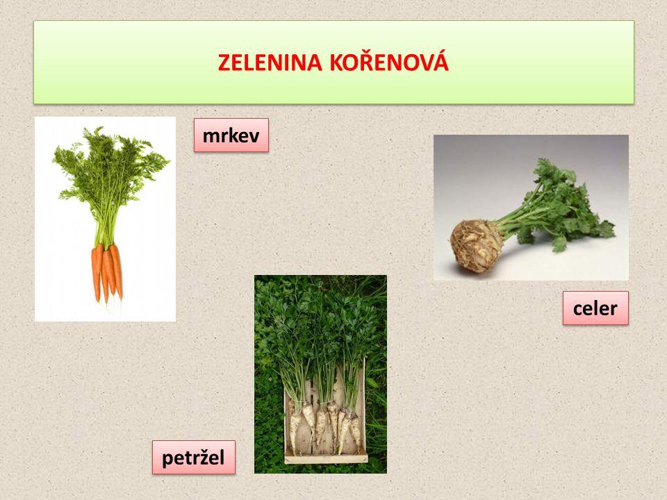 ZELENINA KOŘENOVÁ mrkev celer petržel