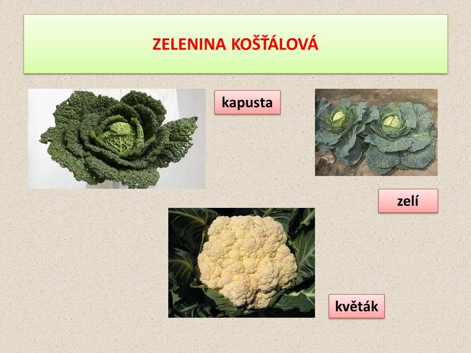 ZELENINA KOŠŤÁLOVÁ kapusta zelí květák