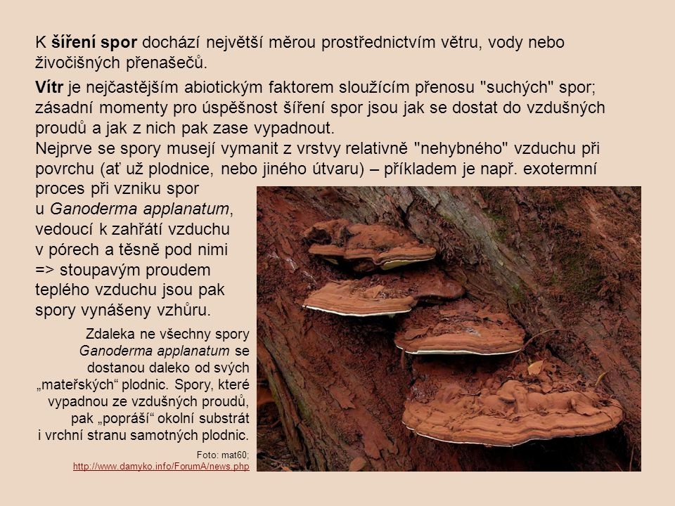 u Ganoderma applanatum, vedoucí k zahřátí vzduchu