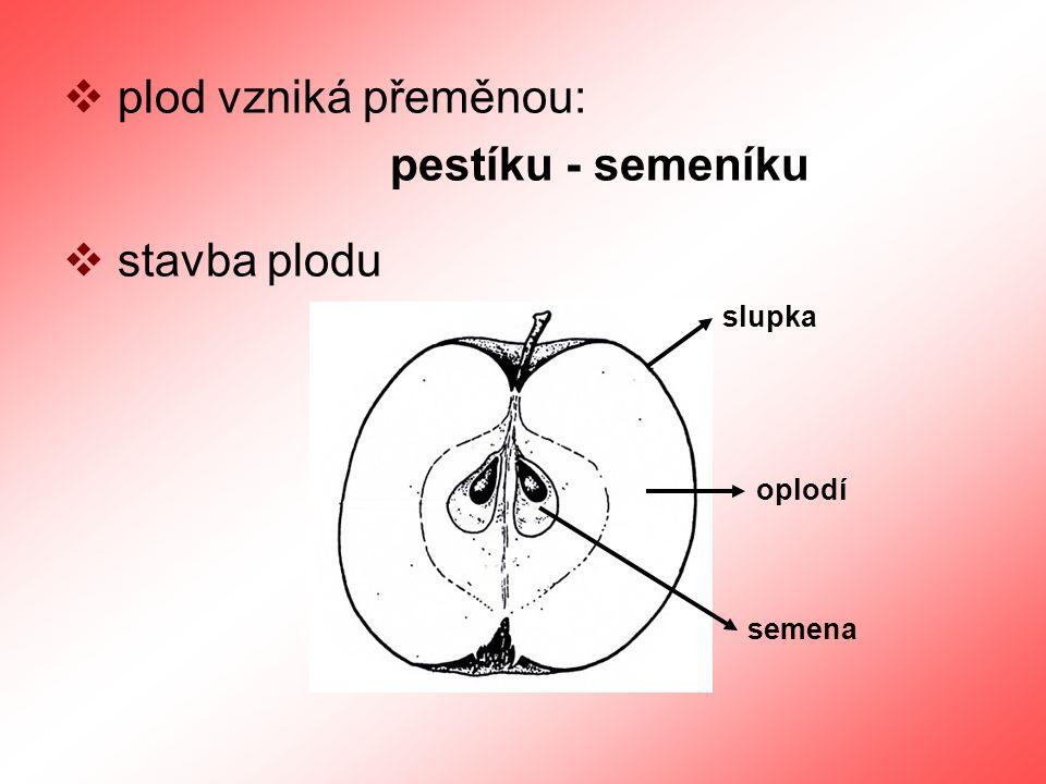 plod vzniká přeměnou: pestíku - semeníku stavba plodu slupka oplodí