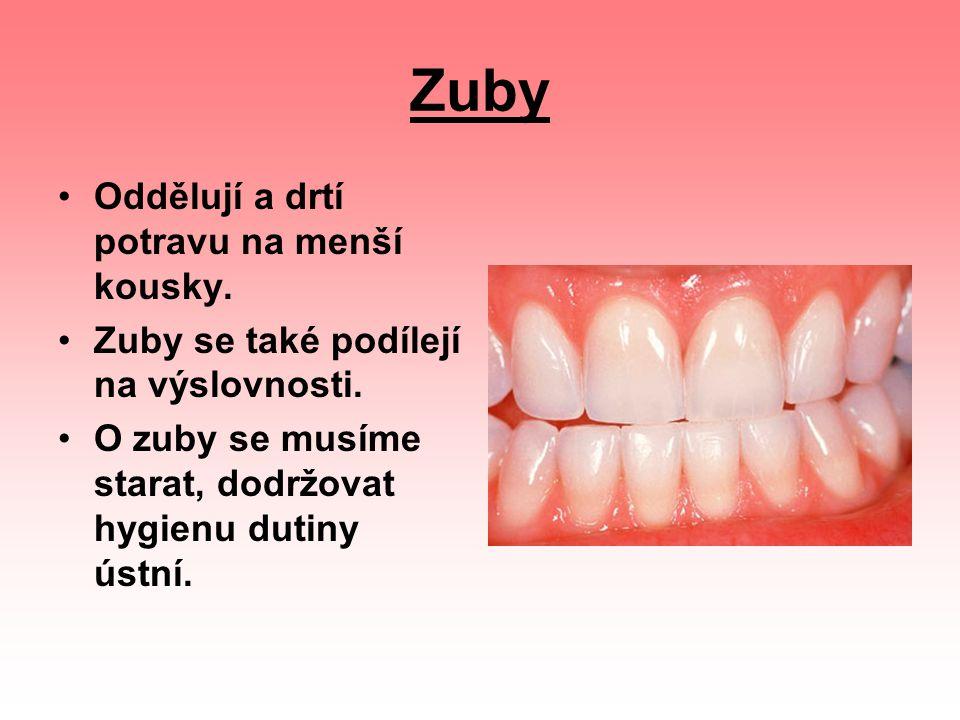 Zuby Oddělují a drtí potravu na menší kousky.