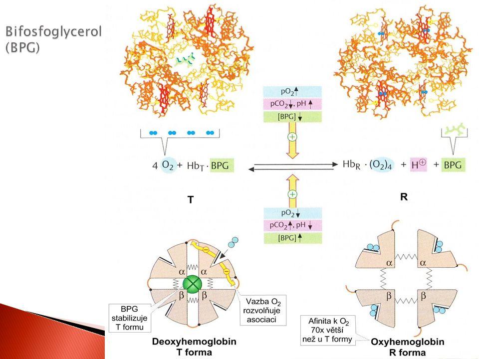 Bifosfoglycerol (BPG)