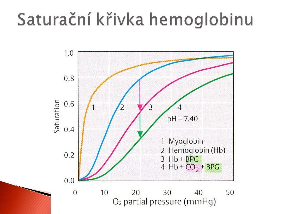 Saturační křivka hemoglobinu