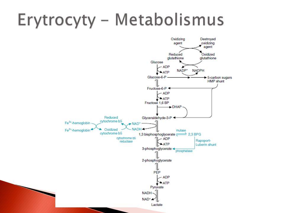 Erytrocyty - Metabolismus