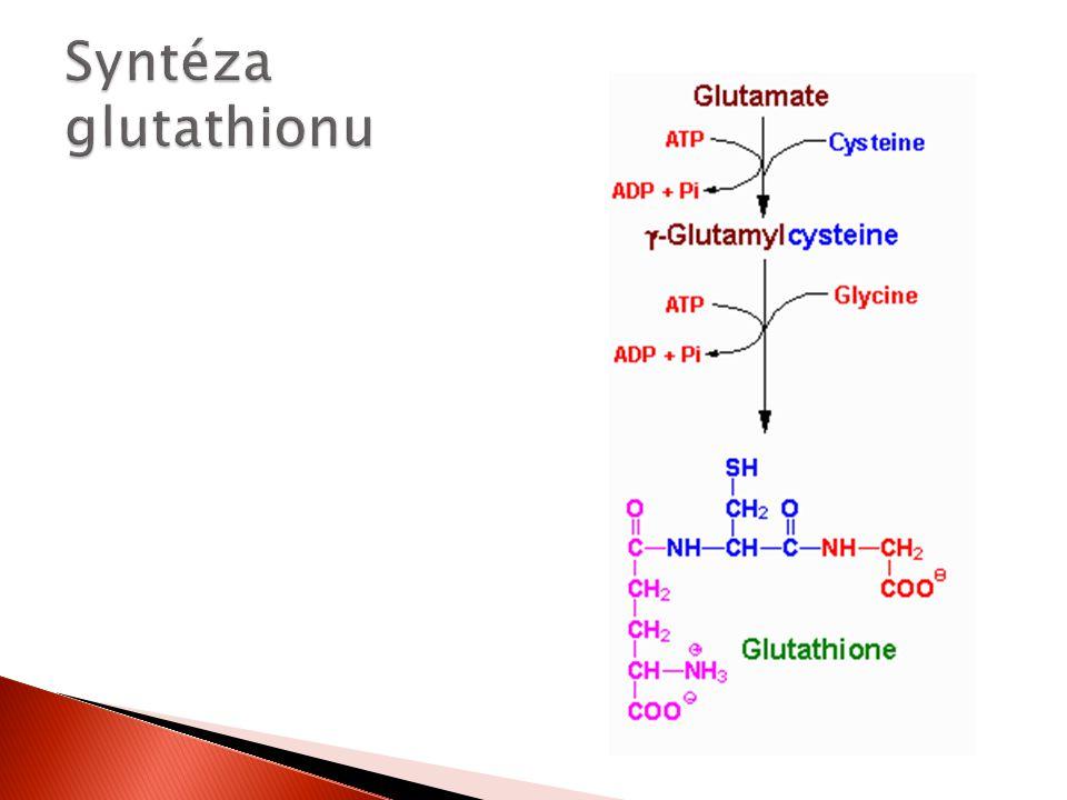 Syntéza glutathionu