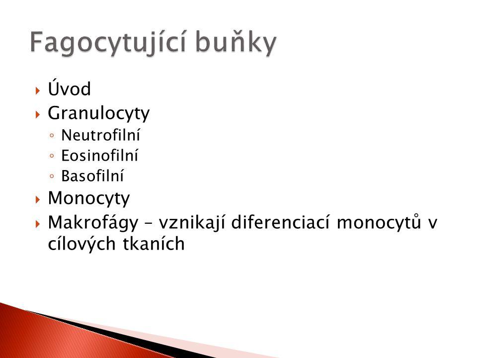 Fagocytující buňky Úvod Granulocyty Monocyty