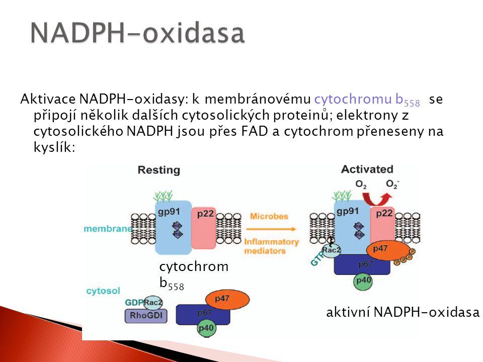 NADPH-oxidasa